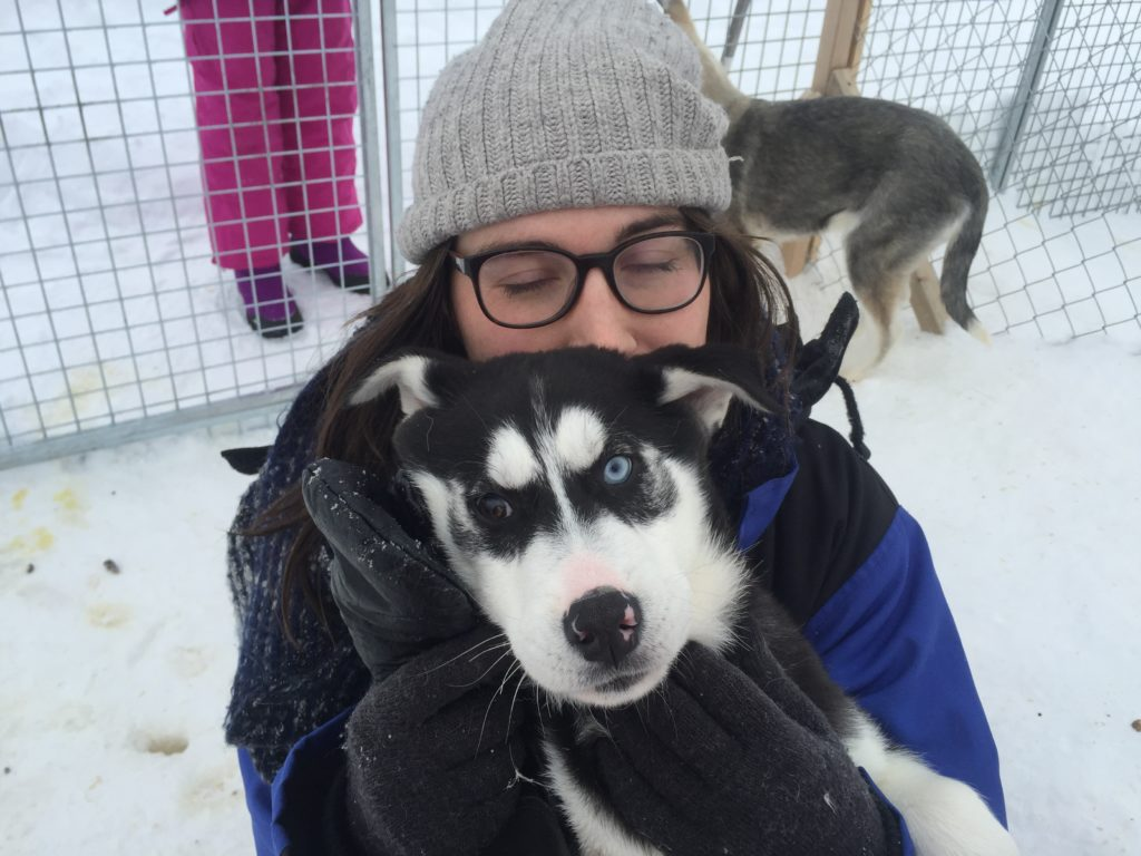 puppies in Abisko