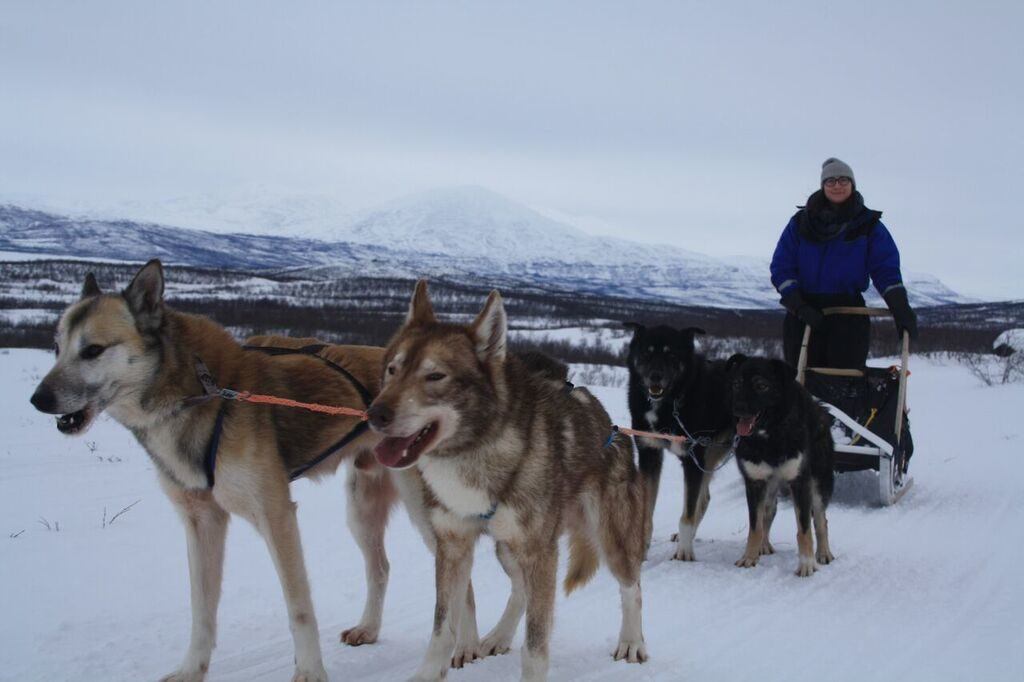 dogsledding in sweden in winter