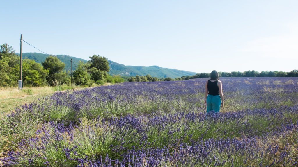 Lavender fields in villages of Provence