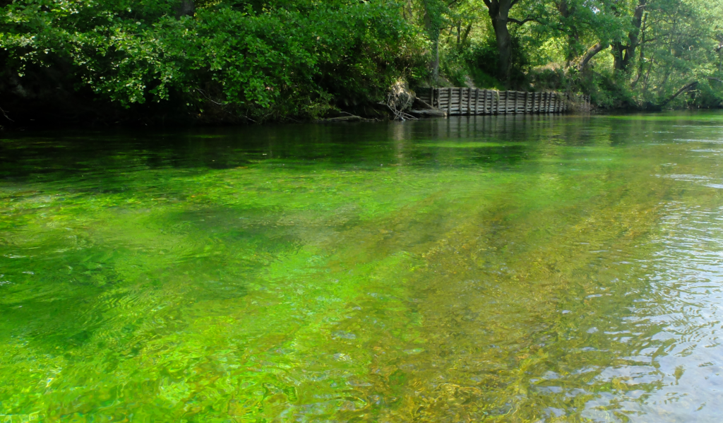 Sorgue river green