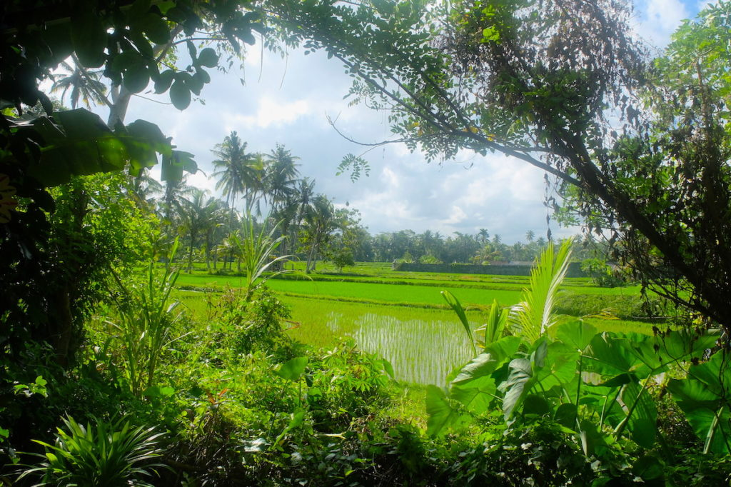 eco cycling in Ubud