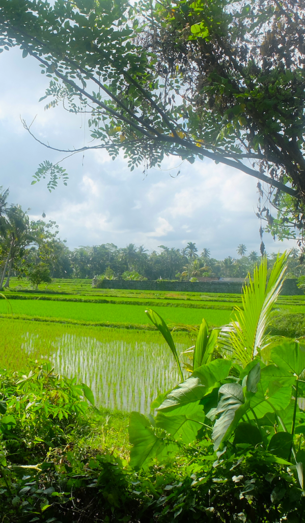 Take a cycling tour to witness the real Bali!