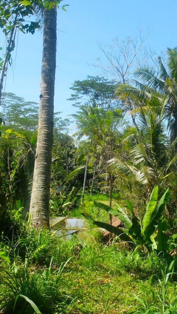 MUST DO: Ride a bike through Bali's rice fields!