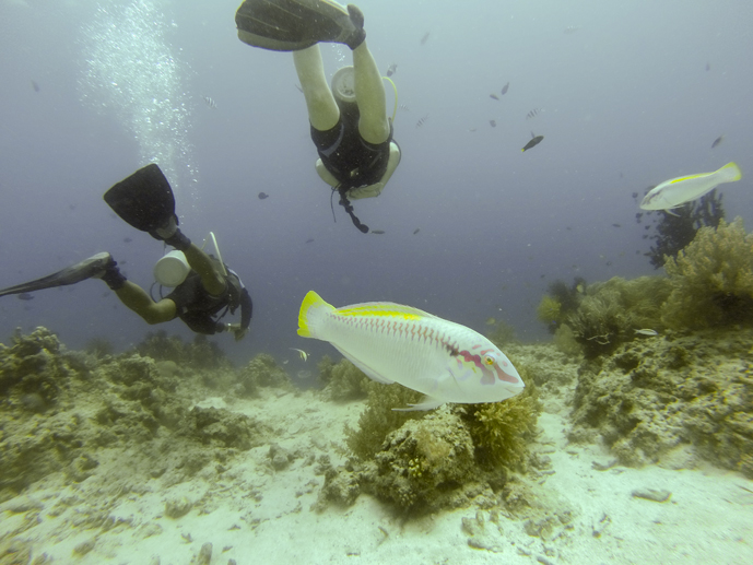 Bohol is a great place to learn to scuba dive!
