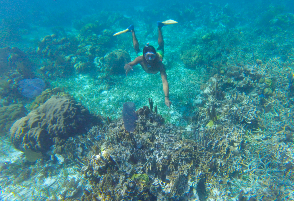 Seeing coral while snorkeling Belize