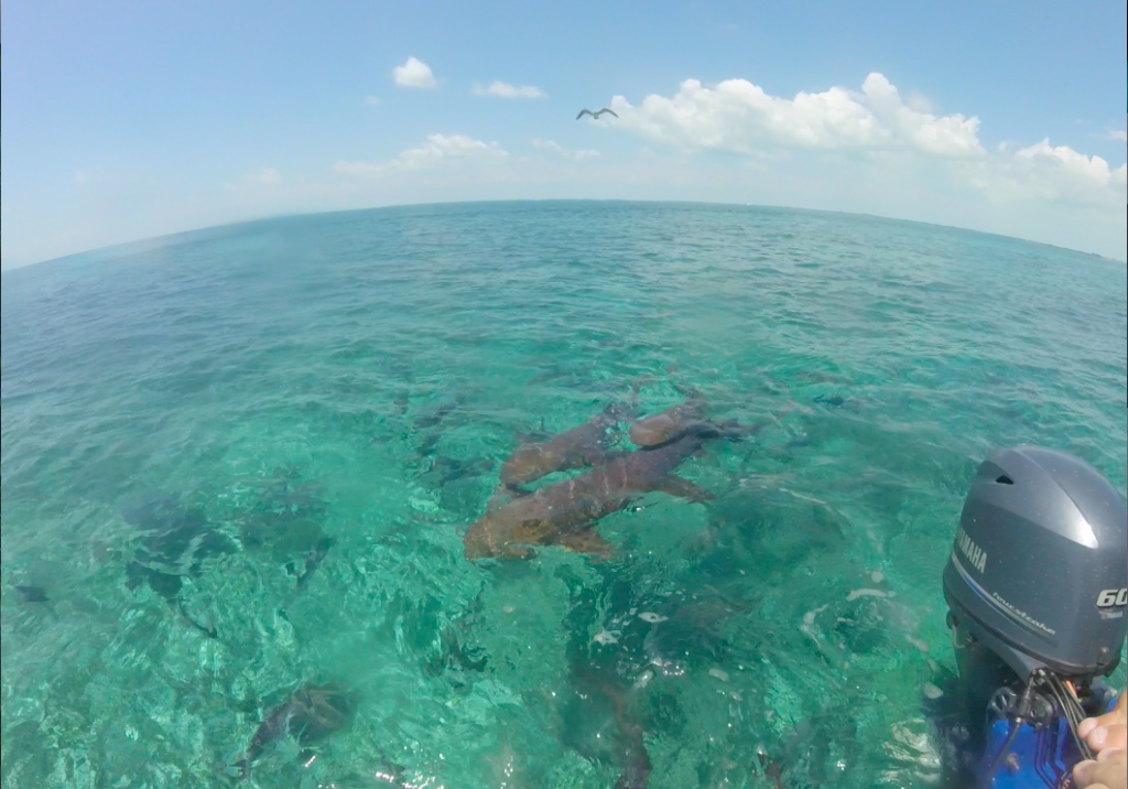 Shark Ray Alley - a place to snorkel in Caye caulker, Belize