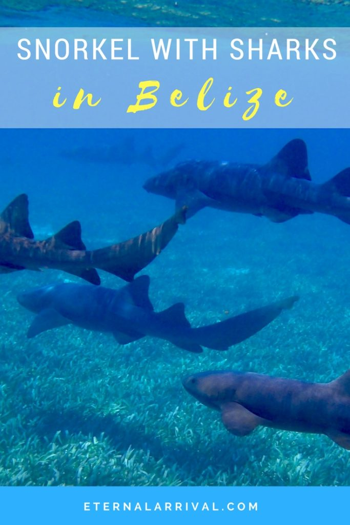 Snorkeling with sharks, rays, tropical fish, and turtles is one of the best things to do in Caye Caulker, Belize. We even saw some amazing surprise visitors!