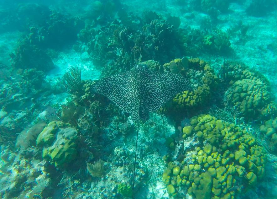 A highlight of snorkeling Belize