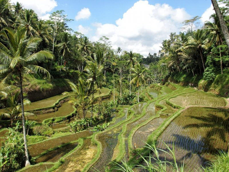 Ubud, another great place to stay in Bali