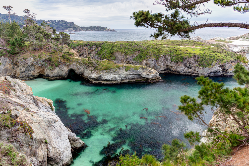 brilliant turquoise waters with some tree limbs in front of it while hiking in pt lobos
