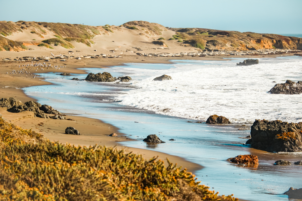elephant seals relaxing on a beach in big sur in the distance