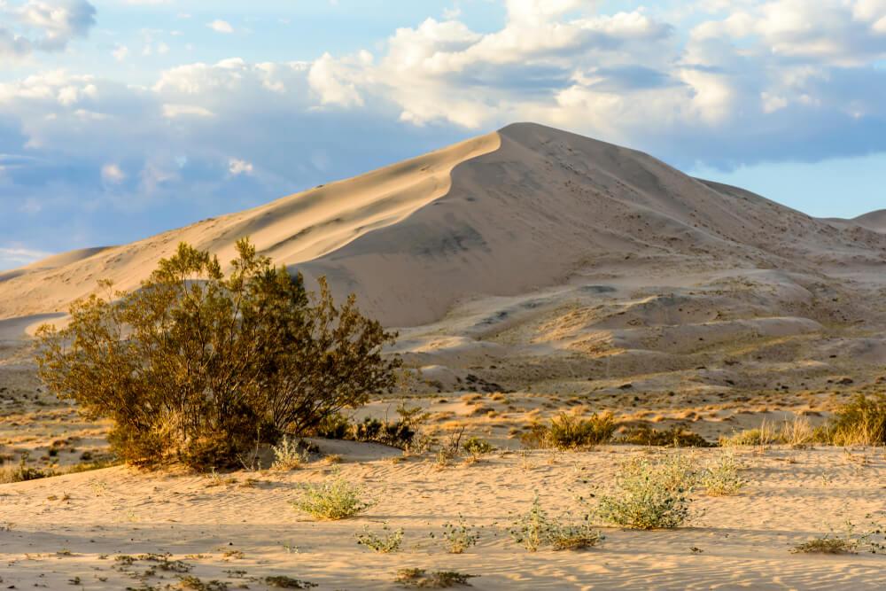 Golden light on Kelso Sand Dunes at sunset in the Mojave Desert, Mojave National Preserve